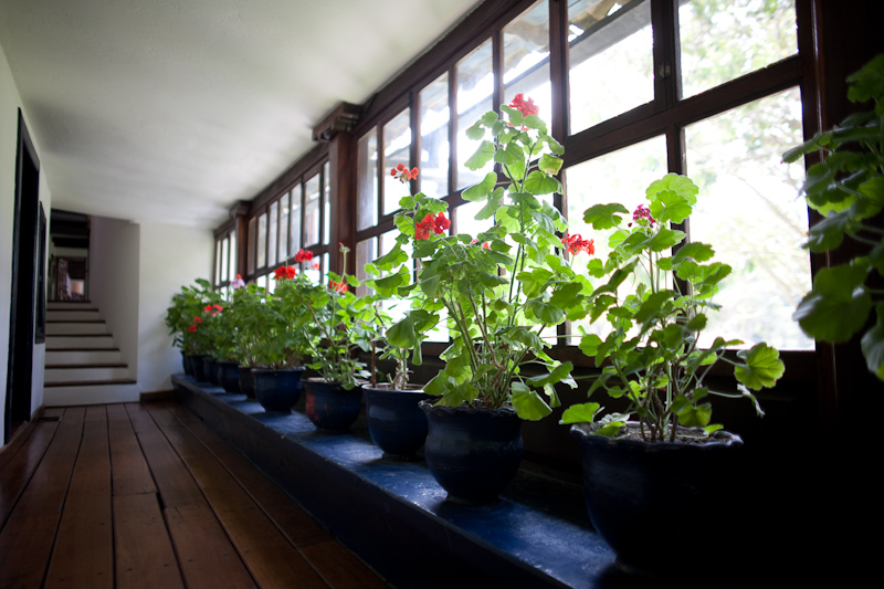 hacienda zuleta geraniums