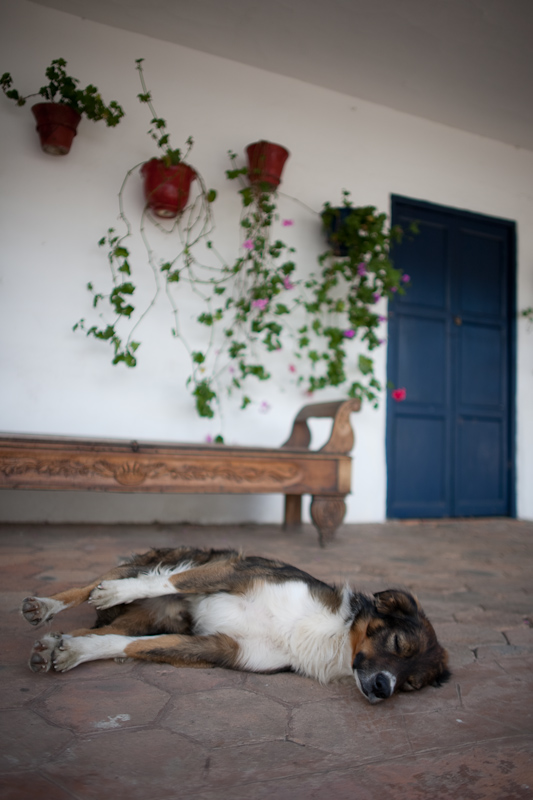 hacienda zuleta dog