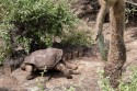 RIP Lonesome George